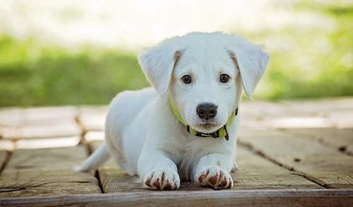 hondenverzekeringen